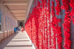 Wandering through a path full of poppies