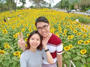 Walking on sunshine☀️☀️These sunflower blooms were so pretty🌻🌻! Easily one of the best blooms I had ever witnessed.  Located opposite Primo Piazza, it's a huge plot of sunflowers just waiting for visitors! Absolutely love the tall sunflower stalks. 📍 Khao Yai, Thailand. . . . . . . . #sunflower #khaoyai #thailand #amazingthailand #visitthailand #clozette