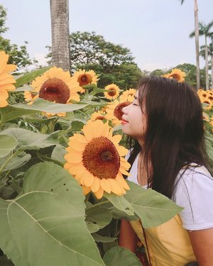 stop & smell the sunflowers (I did and learned they don't have a distinct smell...at least for these ones) && make sure not to get stung by the 🐝 🐝