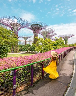 Discover Singapore 🇸🇬 l  Gardens by the Bay⁣ ⁣ My country's beautiful garden city ❤️ The pink Bougainvilleas are real if you are wondering. ⁣ ⁣ Make a guess how many Supertrees we have at Gardens by the Bay? ⁣ . ⁣ .⁣ .⁣ . ⁣ . ⁣ . ⁣ We have 18 Supertrees. And 11 of the supertrees are fitted with solar photovoltaic systems that convert sunlight into energy, which provides lighting and aids water technology within the conservatories below. Our Supertrees are not only beautiful but functional as well👍⁣ . ⁣ . ⁣ If you want to know where are Singapore most instagram worthy places, check out the link to my Singapore blog post in my IG profile bio. ⁣ ⁣ For my Singapore content and most instagrammable places hashtag ➡️🇸🇬#FollowChertoSingapore⁣ ⁣ 📸Singapore Photographer @wilsonisalmostsexy⁣ .⁣ ⁣ ⁣