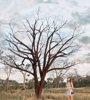 What I did over the long weekend... in search of the next Instagram Star of Singapore. 🤣 💁🏻‍♀️ The Lone Tree, #InstagramTree. Have you checked out #Lakeside Garden? . Fun Fact: 👗 Faith dressed in Fayth @faythlabel . #styledbyfaithy #thelonetree #exploresingapore #ootdsg #faythlabel #clozette
